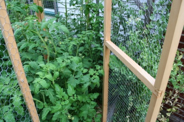Squirrel proof tomato cage, via The New Home Economics