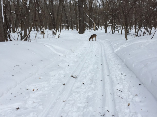 Deer at Fort Snelling State Park